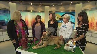 Pet Parade: Missing Dogs Massachusetts