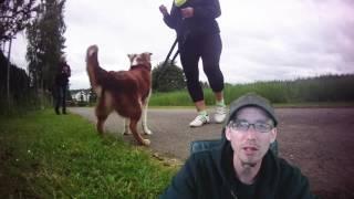HILFE! Mein Hund ist aggressiv an der Leine gegen Hunde/Radfahrer! TEIL 2 - Henry J. Frost
