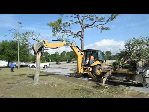 How To Remove A Dead Tree The Easy Way You