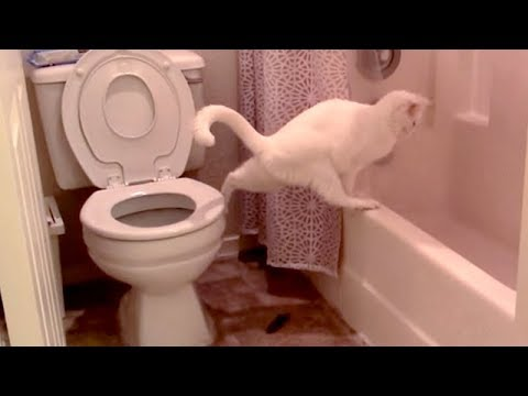 LAUGH HARDER than EVER BEFORE! – Super FUNNY & WEIRD ANIMALS