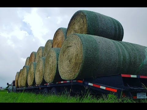 Hauling Hay - Heavy Weight with a Ram 4500 Cummins