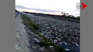 فيديو وصور| حيوانات نافقة وصرف صحي.. «ترعة الإسماعيلية» تقتل الأهالي