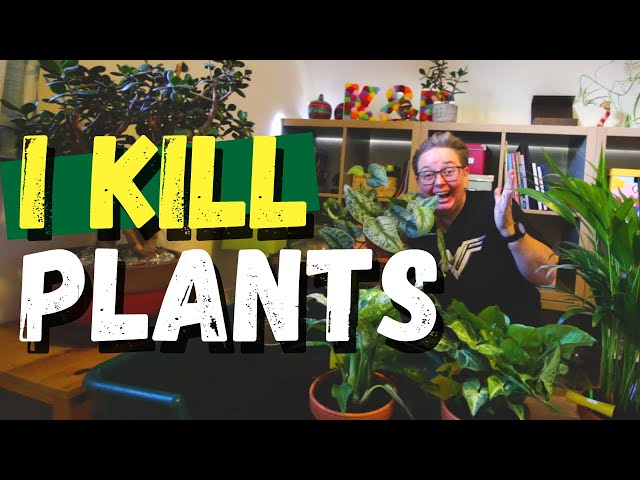 I'm a plant killer - a look at my indoor garden