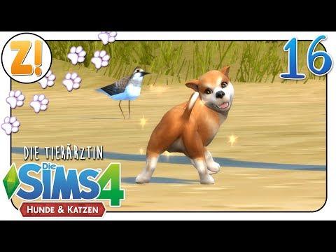 Sims 4 [Dr. Smith & die Tiere]: Happy Birthday Daichi #16 | Let's Play [DEUTSCH]