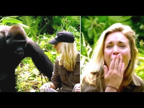 Man Introduces His Wife To The Wild Gorilla He Raised And It Doesn't Go As Planned At All