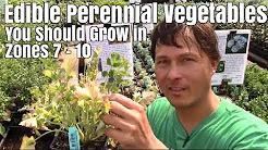 Edible Perennial Vegetables You Should Grow In Your Zone 7-10 Garden