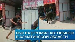 Бык разгромил авторынок в Алматинской области | NurKZ