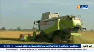 الجزائر أكبر مستورد للقمح اللين الفرنسي بـ 489 ألف طن سنة 2015