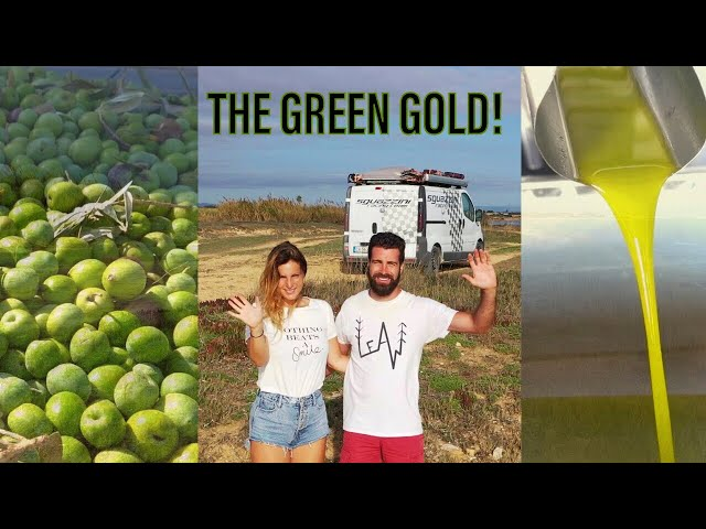THE SECRETS of THE GREEN GOLD - HOW ITALIAN EXTRA VIRGIN OLIVE OIL IS MADE! VAN LIFE SICILY
