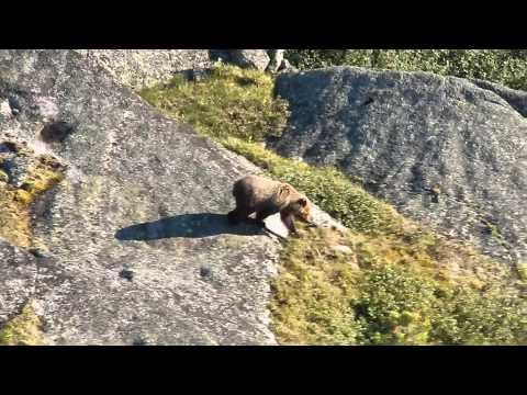 Ергаки 2014. Медведъ