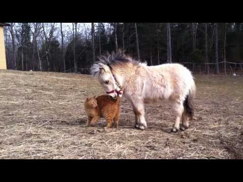 Thumbnail for Cat Video Mini Horse and Cat Hanging Out