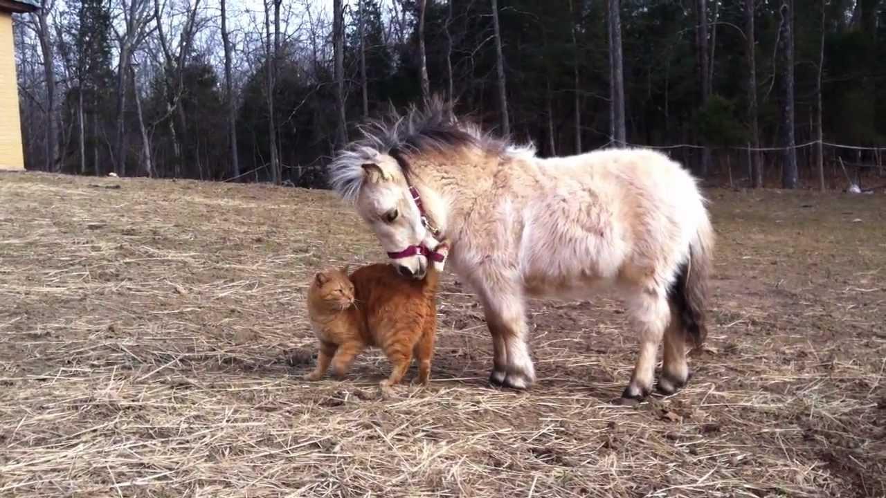 Piper Mini Horse And Mango Fat Catmov Youtube