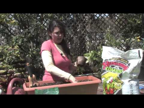 How to Plant Butternut Squash