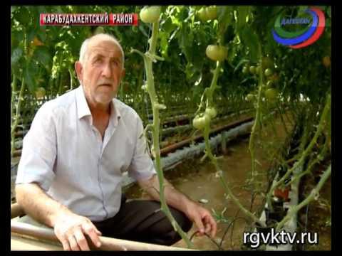 В Дагестане растет число теплиц, в этом году уже собрали свыше 4 тыс. тонн овощей