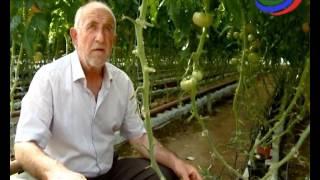 В Дагестане растет число теплиц, в этом году уже собрали свыше 4 тыс. тонн овощей(, 2017-05-16T08:45:09.000Z)