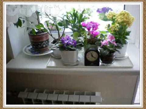 Цветы в на подоконнике фото
