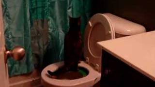Toby poops on the potty