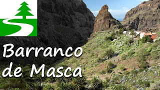 Wandern auf Teneriffa im Barranco de Masca (Mascaschlucht)