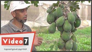 بالفيديو.. الفاكهة المجهولة..