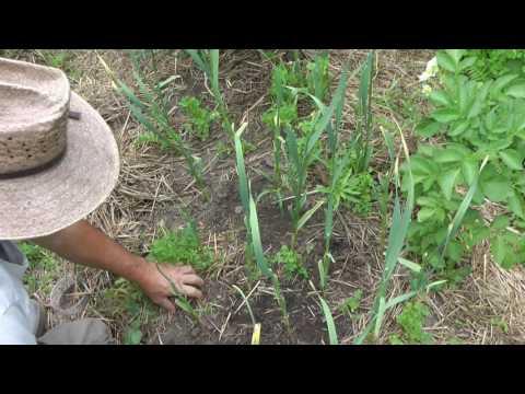 Как выращивают и собирают гречку в Покровском районе