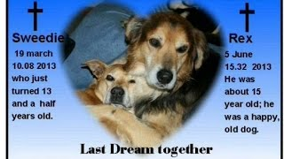 I lost Rex my ,,old rescue dog,, he died in my arms.I miss you my friend..
