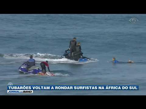 Tubarões voltam a rondar surfistas na África do Sul