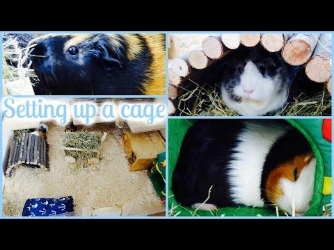 How To Set Up A Guinea Pig Cage