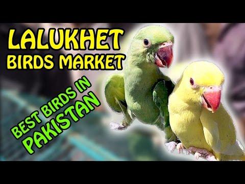 Karachi Birds Market | Lalukhet Birds for Sale | Best Birds in Pakistan | Video in Urdu/Hindi