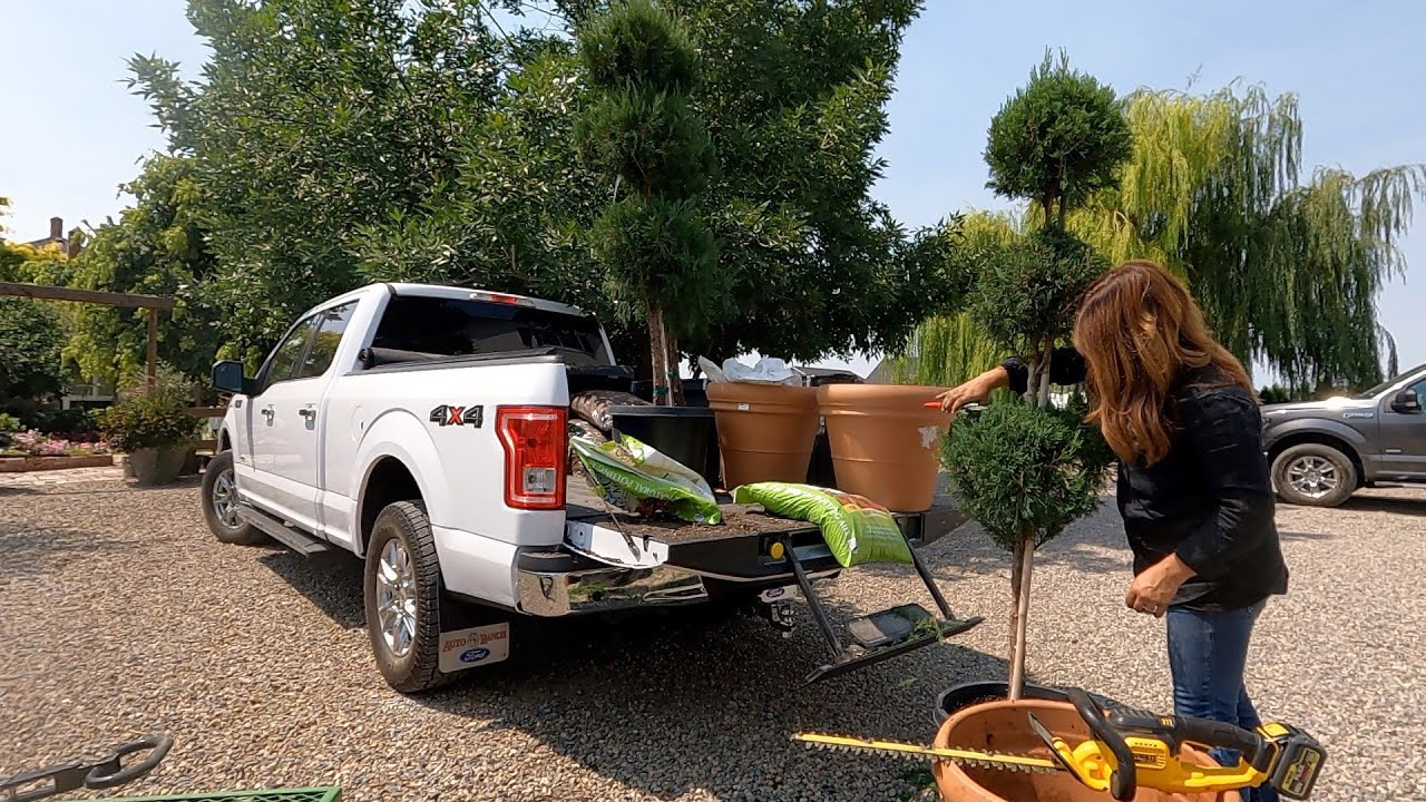 Found an Awesome Deal on Topiary to Replace Some Dead Ones! 🥴👍💚 // Garden Answer
