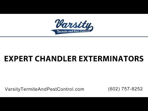 Expert Chandler Exterminators at Varsity Termite & Pest Control