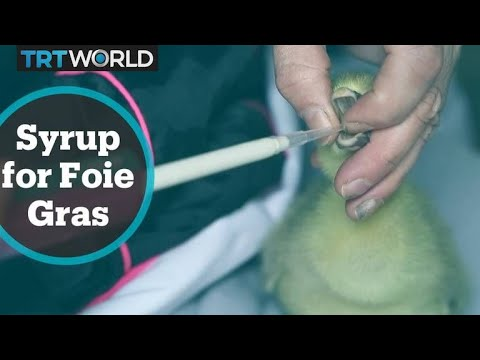 France Foie Gras: French scientists cook up naturally fatty alternative to force-feeding