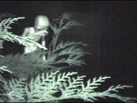 Real Alien Sighting Videos 2018 Youtube