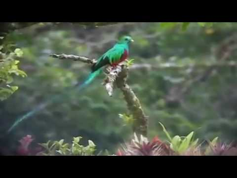 Quetzal: National Bird of Guatemala