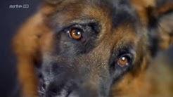 Hundeverhaltensberatung - Der Hund - Unserem besten Freund auf der Spur Doku 2015 | arte