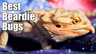 Bearded Dragon Feeders | with LizardGuru