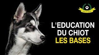 TOUT SUR L'EDUCATION DU CHIOT - LES ERREURS A ABSOLUMENT EVITER