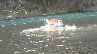 はじめての川遊び!