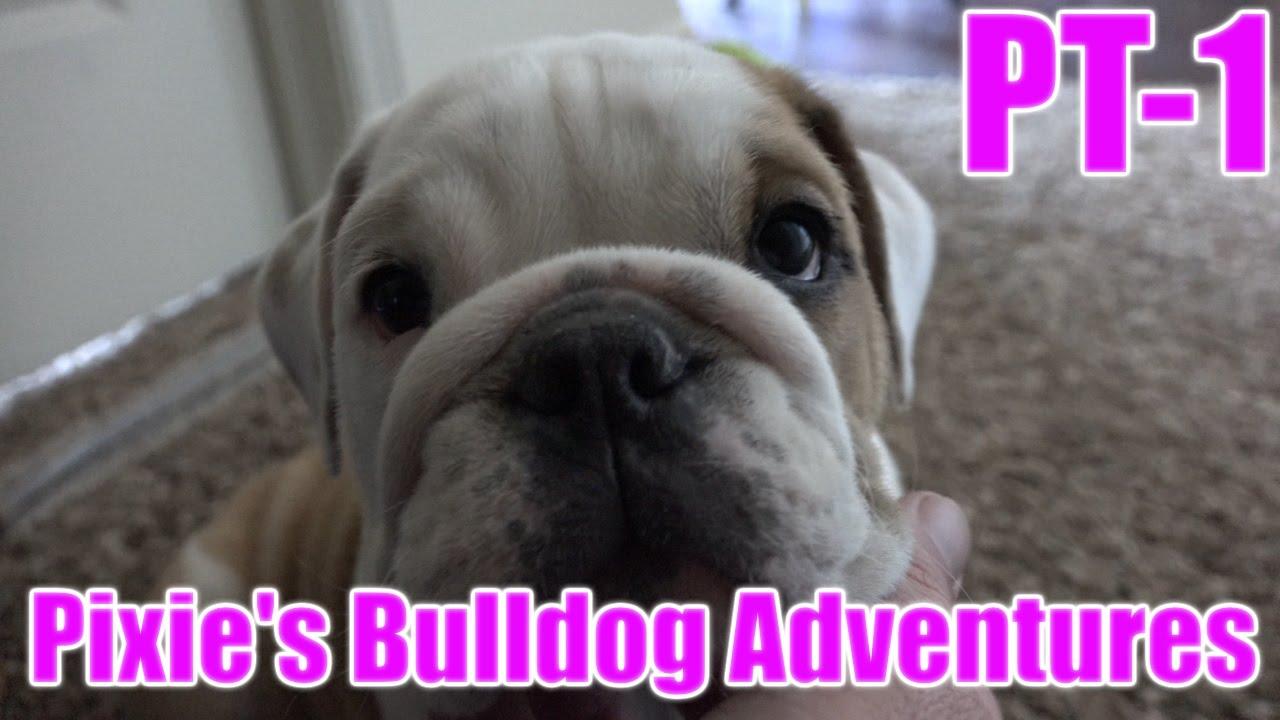 Attractive Bulldog Alarm System Ensign - Wiring Diagram Ideas ...