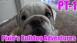 Pixies Bulldog Adventures Part 1 - Princess Pixie Arrives