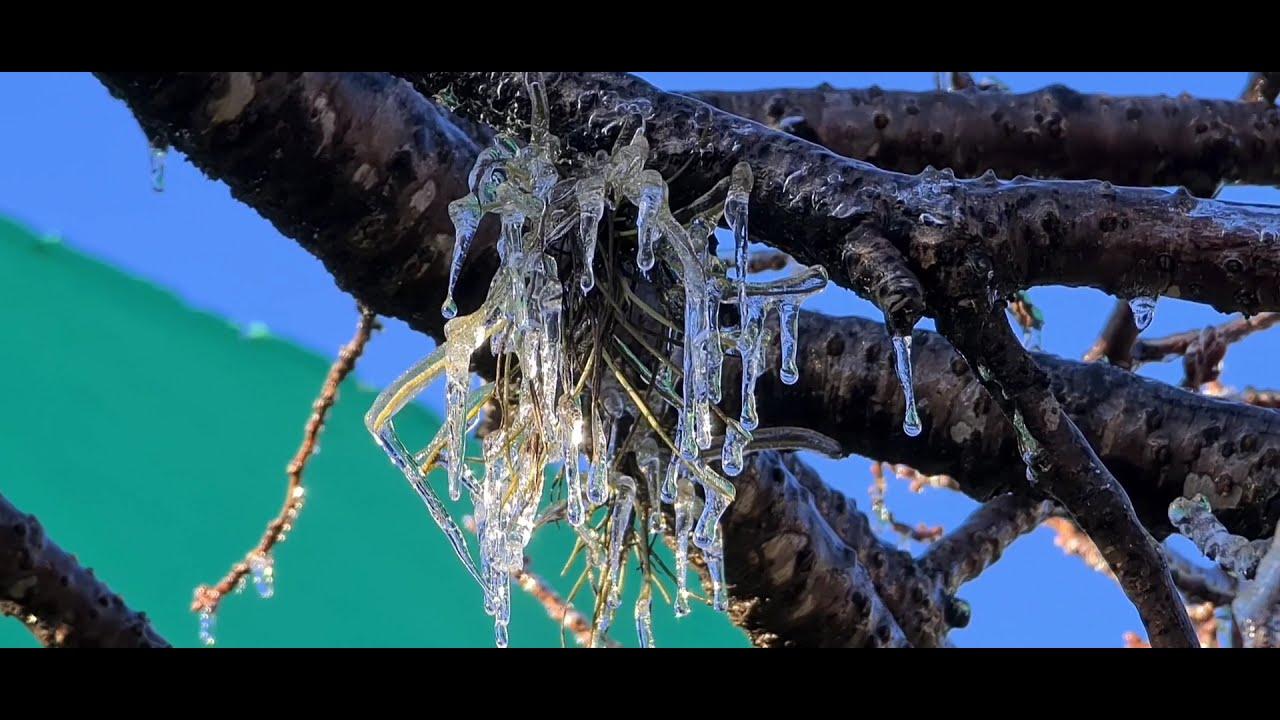 Frio trouxe um espetáculo de imagens na Serra Catarinense