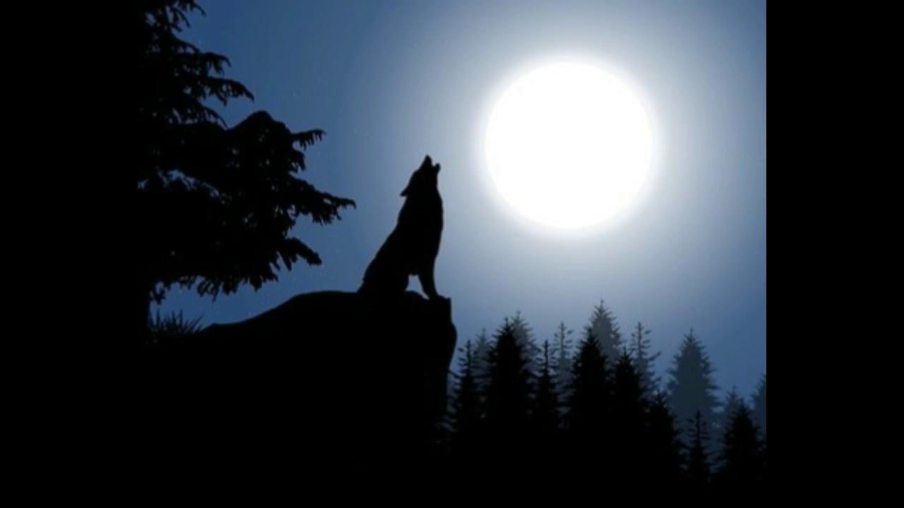 Efecto de sonido lobo aullando - Sound effect Howling wolf