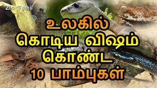 ▶ Tamil People & Blogs