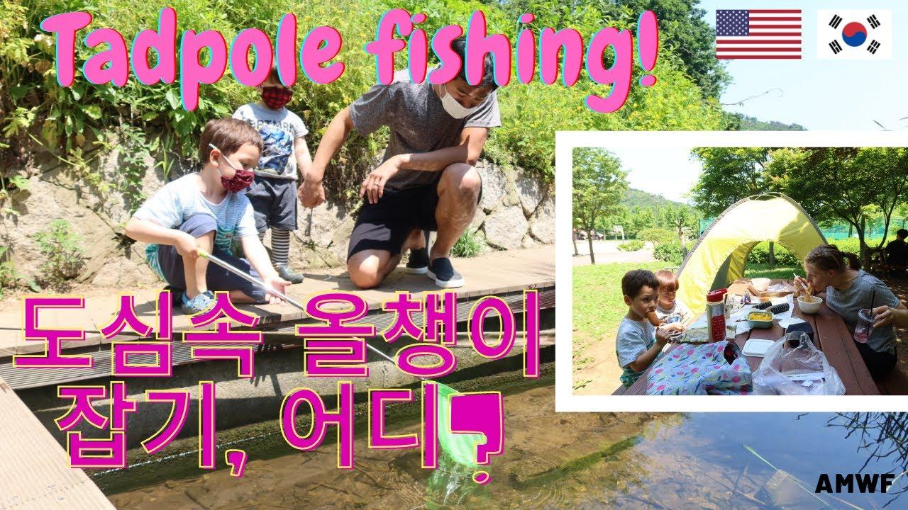 도심 속 올챙이 잡기...TADPOLE FISHING in KOREAN PARK/국제커플 [ENG/KR] / AMWF/ LIFE IN KOREA