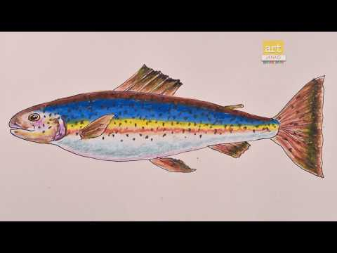 How to Draw Fish Step By Step and Coloring Pages for Kids   Learning Videos  