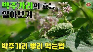 박주가리의 효능 알아보기..박주가리 뿌리 먹는법 | S…