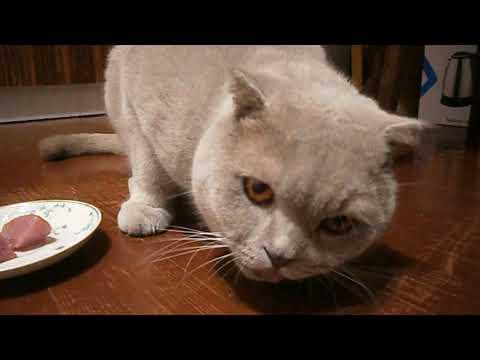 Вопрос: А Ваши кошки какой больше любят корм?