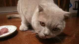 Что любят коты больше - рыбу или мясо?