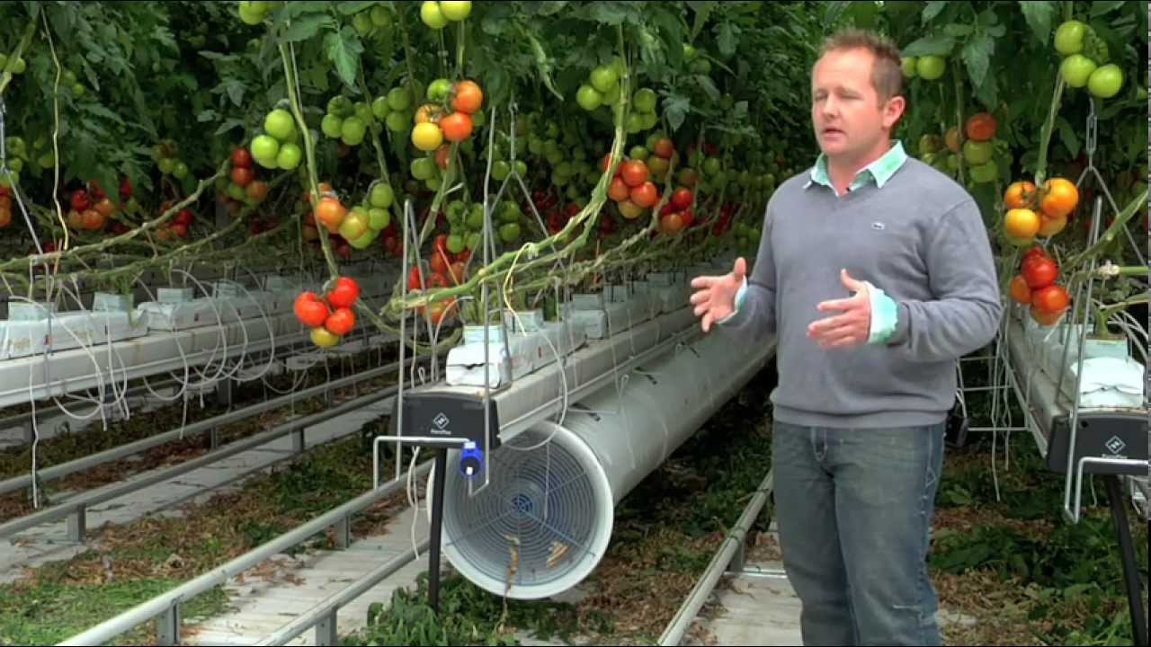8 Reasons Everyone Should Buy A Greenhouse Greenhouse Commercial Nature Fresh Farms Leamington Youtube