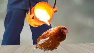 EXPERIMENT: LAVA vs CHICKEN