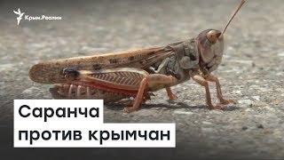 Саранча против крымчан   Радио Крым.Реалии